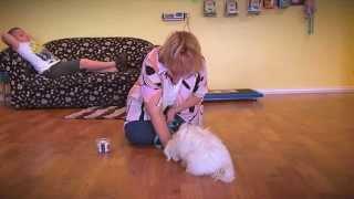 ADVANCE Puppy Care - Puppy Preschool