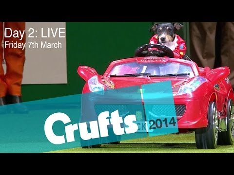 (Live - Live coverage of Day 2 of the greatest Dog Show on earth! Live from the NEC Arena in Birmingham UK, all the action from Day 2 of Crufts including Agility, Fl...