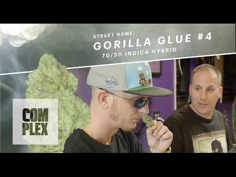 "Motor City High: ""Gorilla Glue #4"" Marijuana Strain | Ep. 5 On Complex"