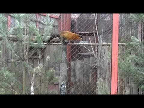 В зоопарке. Куница