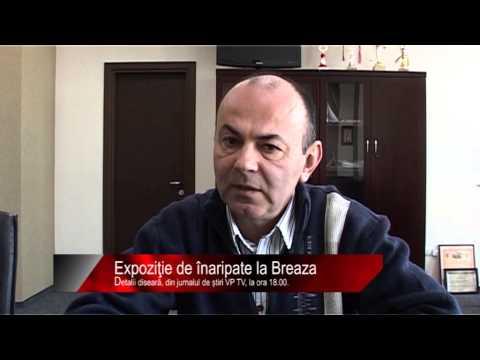Diseară la știri VP TV: Expoziţie de înaripate la Breaza