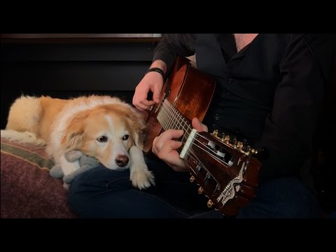 Guy plays Johnny Cash's version of 'Hurt' on the guitar, does an amazing job. (The dog is great too)