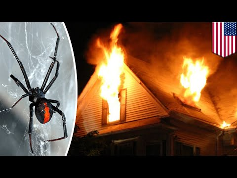 Man accidentally sets home on fire blowtorching spiders - TomoNews