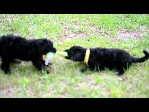 Dani and Delight playing tug of war