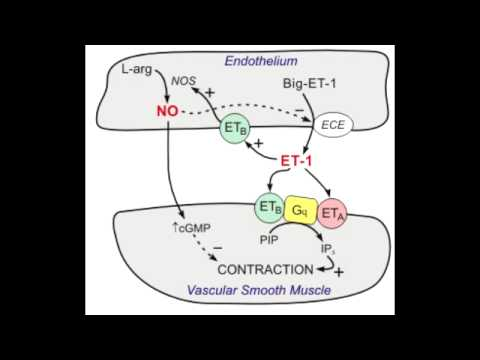 Bosentan - Endothelin blocker