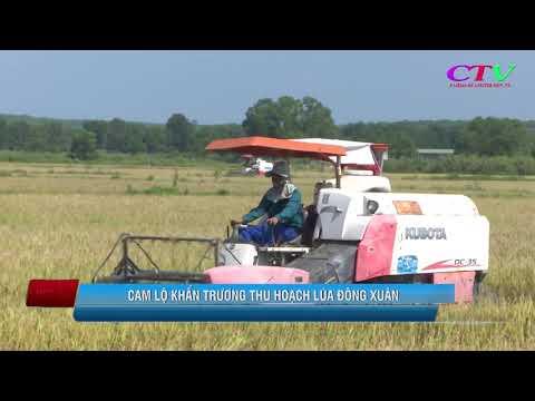 Khẩn trương thu hoạch lúa vụ Đông xuân