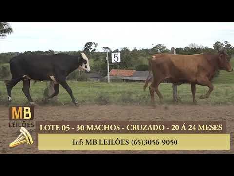 196º LEILÃO VIRTUAL MB LEILÕES