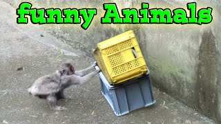 Funny Animals:Funny Monkeys