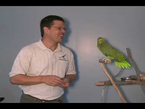 Moby, the yellow naped Amazon parrot