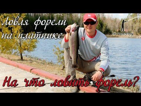 на что-то  подстерегать лосось в платном пруду