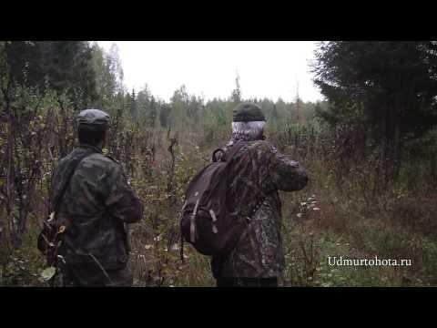 Elk hunt in Udmurt Republik 2011