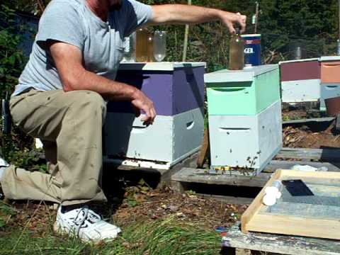 BEEKEEPING,American foulbrood powdered sugar mix.Small Hive Beetle traps.GA. Sugar water feeding.