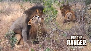 Video Male On Male Mounting Within A Dominant Coalition MP3, 3GP, MP4, WEBM, AVI, FLV April 2019