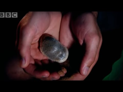 Desert - Wildlife expert Steve Leonard travels to the desert to try out some of the ground breaking technologies employed by conservationists in their effort to monit...