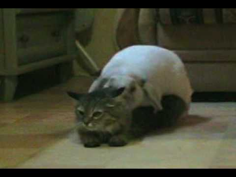 Кот трахал онлайн