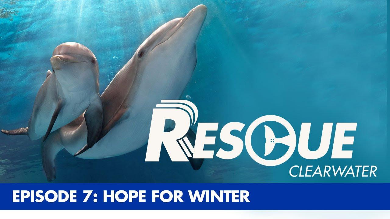 Rescue Clearwater Clearwater Marine Aquarium