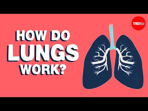 How do lungs and liver work? TED-Ed videos