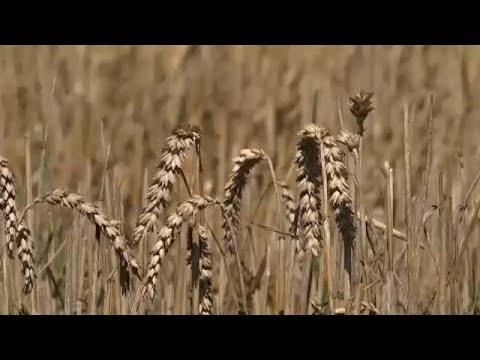 Οικονομική ενίσχυση λόγω…καύσωνα ζητούν οι Γερμανοί αγρότες…