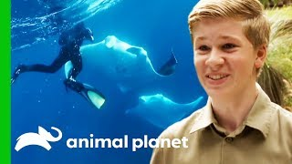 Robert Irwin's Best Moments From Season 1 | Crikey! It's The Irwins by Animal Planet