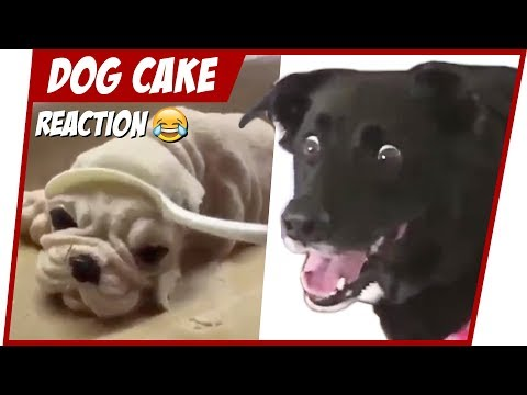 HILARIOUS DOG REACTION TO CUTTING CAKE 😂TRY NOT TO LAUGH 🐕