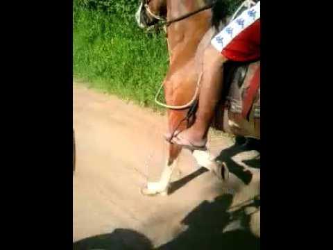 Cavalo roubado em itu estou a procura