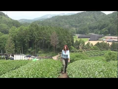 Matcha: The Way of Tea …. -On location in Japan