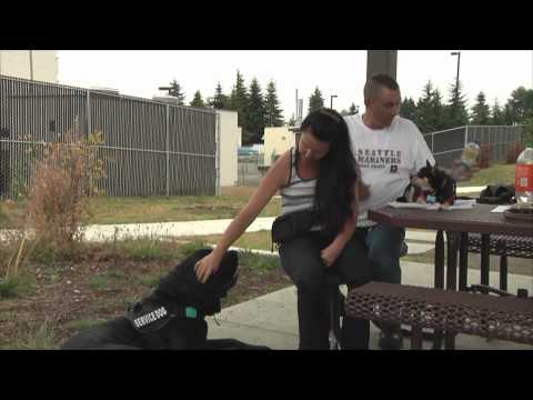 0 Military Dog Video of the Week(August 23th, 2012): Service Dogs
