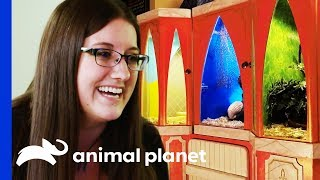 Kristen Wants A Truly Magical Enclosure For Her Three Snakes | Scaled by Animal Planet