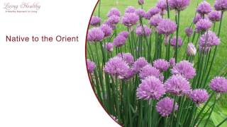 Living Healthy Moment -  Chives