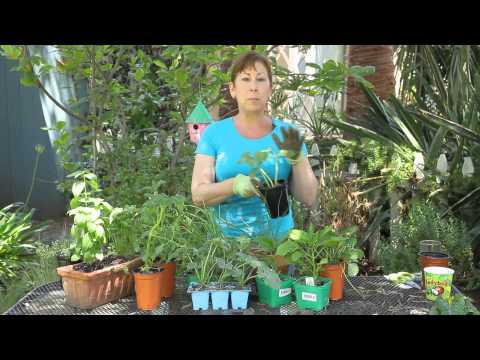 Summer Vegetable Garden Planting for Southern California : Garden Space