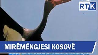 Mirëmëngjesi Kosovë - Drejtpërdrejt nga Termokissi 18.10.2018