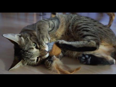 Katzenspielzeug Federbälle mal anders genutzt