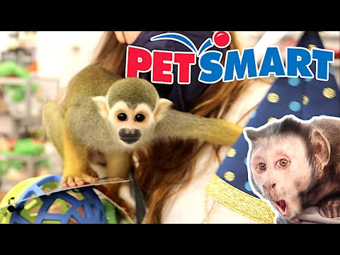 Baby Monkey oLLie Goes To PETSMART To Get @MONKEYBOO A Birthday Surprise Present! 🎁🐒