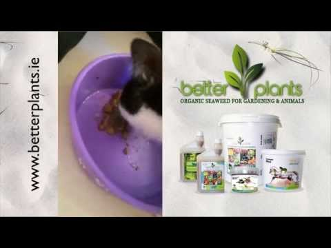 Better Pet Care   Better Pets Seaweed Diet Supplement