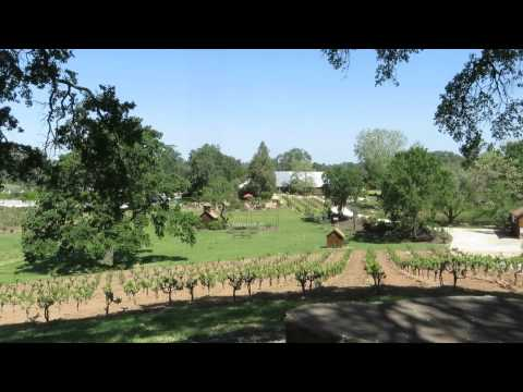 Young's Vineyard and Winery For Sale