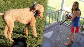 We powerwashed our porch & Ollie loved playing in the water!Visit our Online Store → http://thefreylife.com/storeWatch Yesterday's Vlog → https://youtu.be/d-2BzuCQRlwONE YEAR AGO → https://youtu.be/ZX-AV8mO8882 Years Ago → https://youtu.be/0_7eqvsyQn8↓↓↓Watch more from The Frey Life↓↓↓What is Cystic Fibrosis → https://youtu.be/llrxGuU5o5cNew Here Playlist → https://goo.gl/EZgra7Draw My Life → https://youtu.be/jHYw-gQimwsService Dog Q&A → https://youtu.be/5Nh1fS1N9NQCystic Fibrosis Q&A → https://youtu.be/YDJ3yIS6SWIAre We Having Kids? → https://youtu.be/uHjEcXvn2ZUPeter's Channel → https://youtube.com/peterfreylifeSubscribe to our channel → http://goo.gl/LvdRdF → We post new vlogs everyday showing daily life with Cystic Fibrosis!Help us make these videos more accessible by contributing closed captions! → http://www.youtube.com/timedtext_cs_panel?tab=2&c=UCFJY0O-pkdXs6YuM5KW7r7gOUR CAMERASCanon G9X → http://amzn.to/1WhMLbnCanon 70D → http://amzn.to/1VHJmEfMavic Pro Drone → http://amzn.to/2ixXL4WFOLLOW US!Mary's Instagram → http://instagram.com/freylivingPeter's Instagram → http://instagram.com/peterfreylifeTwitter → http://twitter.com/thefreylifeGoogle+ → http://google.com/+thefreylifeFacebook → http://facebook.com/thefreylife