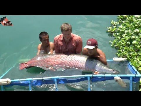 Der See der Giganten - Angeln in Thailand