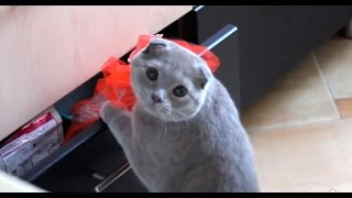 """Cute cat is surprised opening the drawer and look at his reaction◅ IGNORE TAGS: """"fail"""" """"fails"""" """"cheerleader fails"""" """"girls fails"""" """"hot..."""