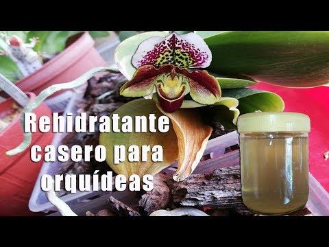 Videos caseros - Rehidratante casero para las Orquídeas  Orquiplanet