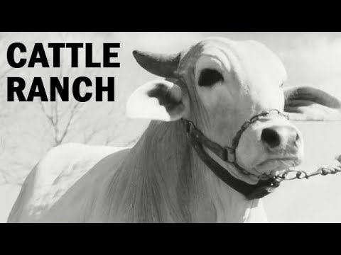 Life on a Cattle Ranch in the 1940s America: The Cowboy | Documentary | 1943