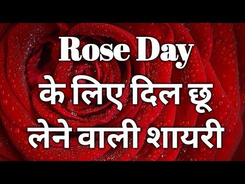 rose day shayri