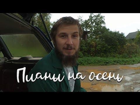 Про большие  планы и собачью любовь - DomaVideo.Ru
