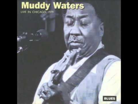 Tekst piosenki Muddy Waters - Caldonia po polsku