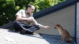 Полицейский спас оказавшуюся на крыше дома собаку