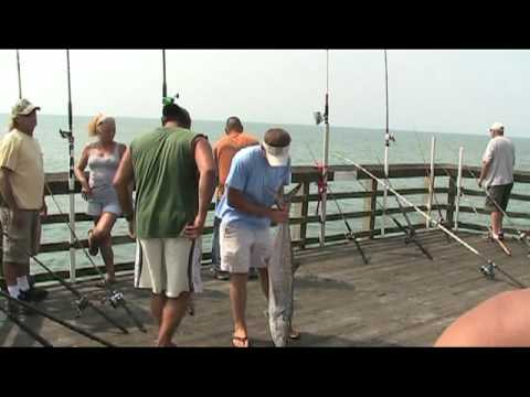 King mackerel fishing coastal fishing videos for Surf city pier fishing report