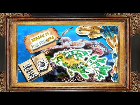 Dragón de mar foliáceo   El Dragón con cubierta de planta    Animales raros y dónde encontrarlos 