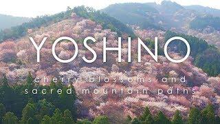 Yumemi Sakura, Yoshino - cherry blossoms and sacred mountain paths / 夢見櫻 - 奈良 吉野山 桜本坊 千本桜