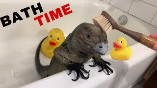 Video BATH TIME FOR GIANT PET LIZARD !! MP3, 3GP, MP4, WEBM, AVI, FLV Agustus 2019