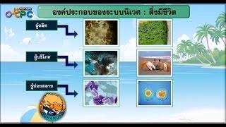 สื่อการเรียนการสอน การสำรวจนิเวศแหล่งน้ำ ม.3 วิทยาศาสตร์