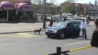 Вижте какво направиха кучетата с колата му!